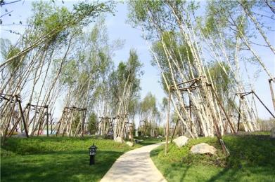 园林 (14).jpg